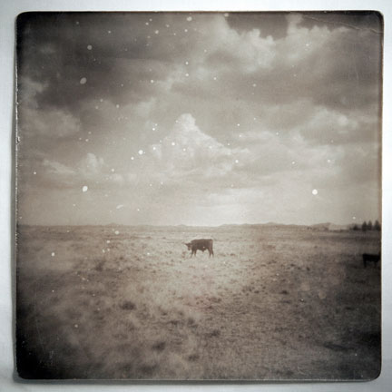 the bull, sonoita, arizona